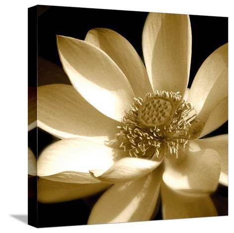 Lily Light I-Malcolm Sanders-Stretched Canvas Print