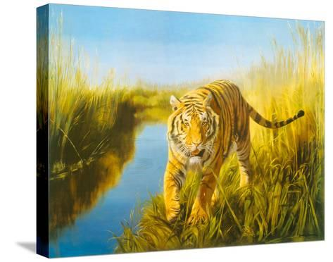 Tiger In The Indian Sunderbans-Leonard Pearman-Stretched Canvas Print