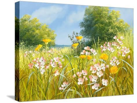 Cuckoo Flowers-Mary Dipnall-Stretched Canvas Print