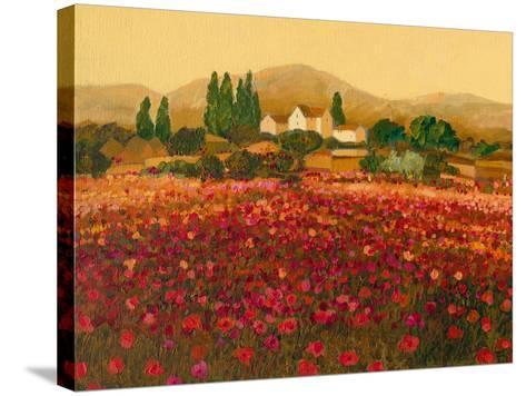 Evening Light, Languedoc-Hazel Barker-Stretched Canvas Print