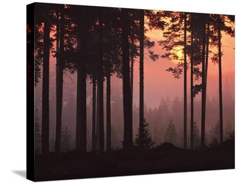 Forest Twilight-Peter Lilja-Stretched Canvas Print