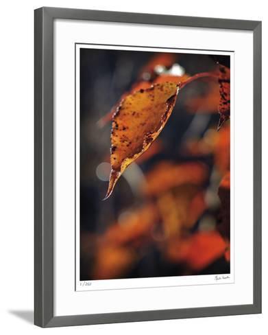 Fall Flames-Michelle Wermuth-Framed Art Print