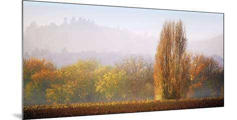 Vineyard Mist-Lance Kuehne-Mounted Giclee Print