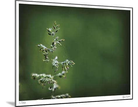 Sparkley-Michelle Wermuth-Mounted Giclee Print