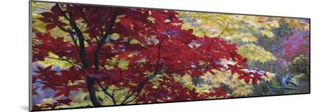 Maple Glade I-Bill Philip-Mounted Giclee Print