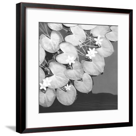 The Lily Pool B&W-Douglas Yan-Framed Art Print