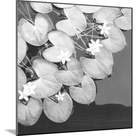 The Lily Pool B&W-Douglas Yan-Mounted Giclee Print