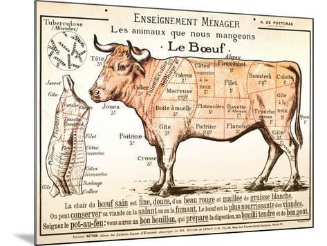 Beef Diagram--Mounted Art Print