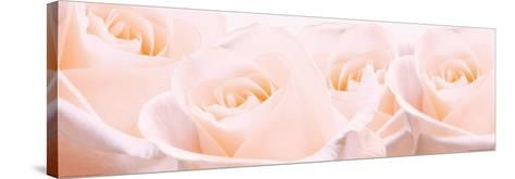 Bridal Bouquet of Pale Pink Roses--Stretched Canvas Print