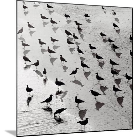 Escher's Seagulls-Michael Kahn-Mounted Art Print