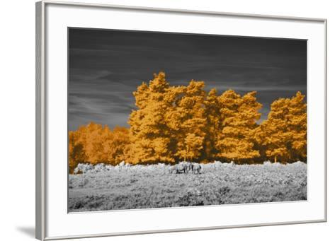 Golden Forest-Linda Wood-Framed Art Print