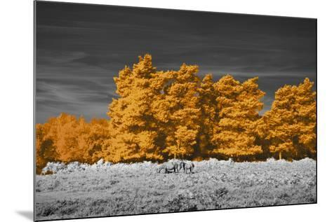Golden Forest-Linda Wood-Mounted Giclee Print