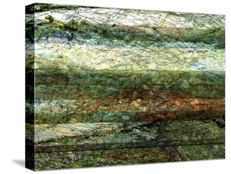 Lines of Nature I-Danielle Harrington-Stretched Canvas Print