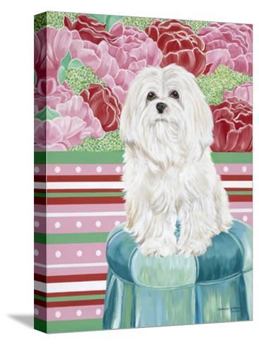 Della Rose Maltese-Carolee Vitaletti-Stretched Canvas Print