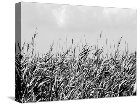 Dune Triptych I-Jeff Pica-Stretched Canvas Print