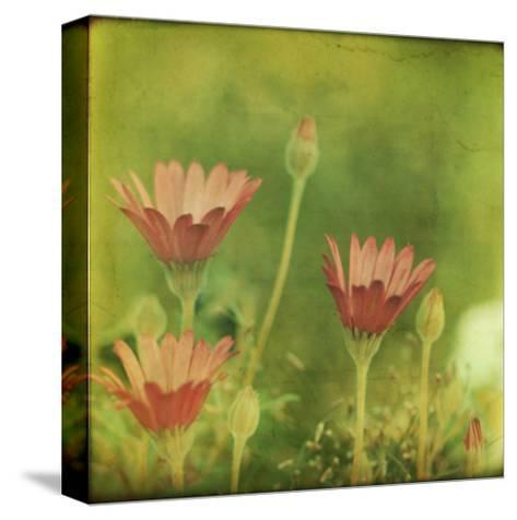Dream in Pink IX-Jennifer Jorgensen-Stretched Canvas Print