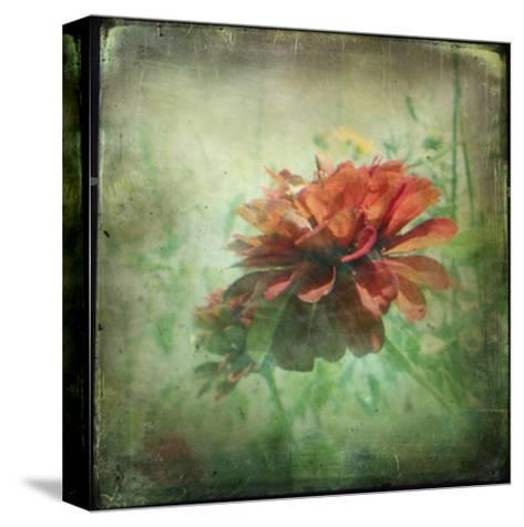 Dream in Pink XI-Jennifer Jorgensen-Stretched Canvas Print