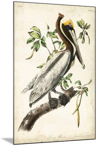 Brown Pelican-John James Audubon-Mounted Giclee Print