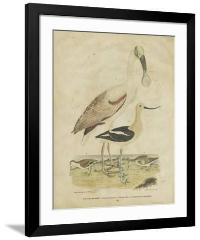 Embellished Spoonbill & Sandpipers-Alexander Wilson-Framed Art Print