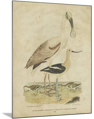 Embellished Spoonbill & Sandpipers-Alexander Wilson-Mounted Art Print