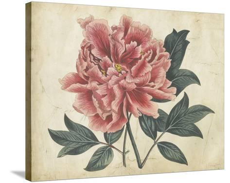 Embellished Peony Garden I-Curtis-Stretched Canvas Print