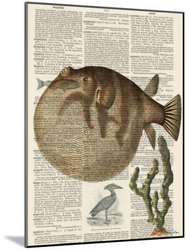 Belly Fish 2-Tina Carlson-Mounted Art Print