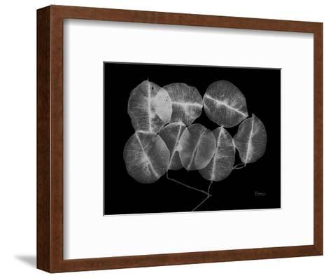 Seed Pods-Albert Koetsier-Framed Art Print
