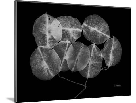 Seed Pods-Albert Koetsier-Mounted Art Print
