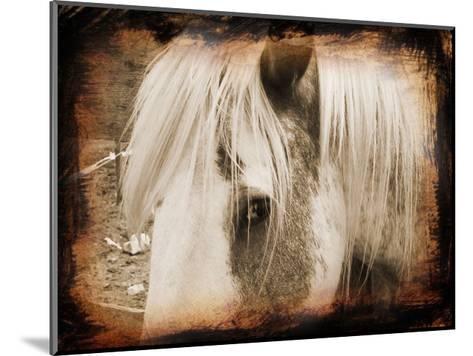 Sepia Horse-Suzanne Foschino-Mounted Art Print