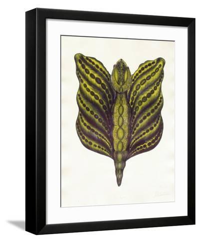 Mr Papillon II-Ben Banay-Framed Art Print