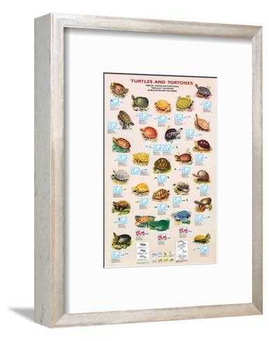 Turtles and Tortoises--Framed Art Print