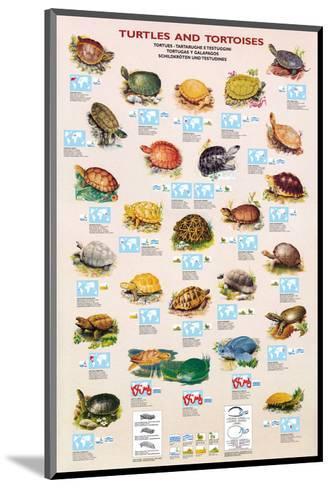 Turtles and Tortoises--Mounted Art Print