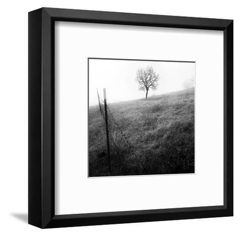 Tree and Fence I-Shane Settle-Framed Art Print