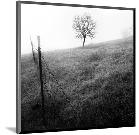 Tree and Fence I-Shane Settle-Mounted Art Print