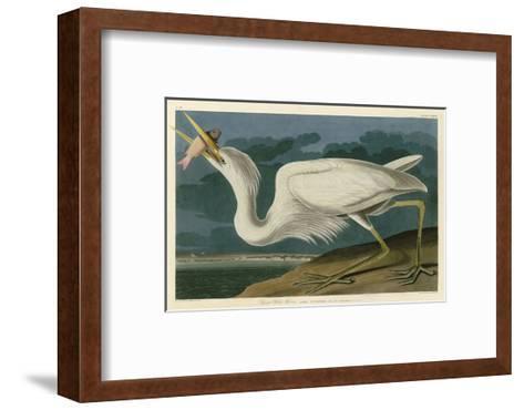 Great White Heron-John James Audubon-Framed Art Print