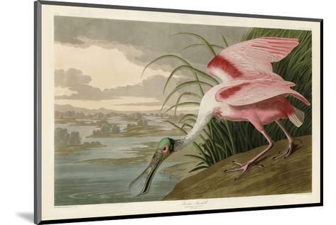 Roseate Spoonbill-John James Audubon-Mounted Art Print