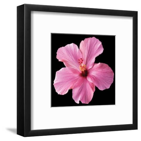 Pink Hibiscus-Christine Zalewski-Framed Art Print