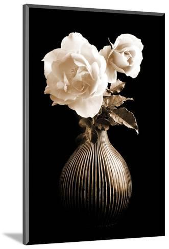 Lighted White Roses-Christine Zalewski-Mounted Art Print