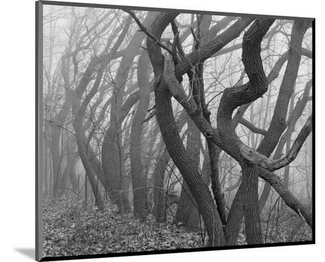 Potato Creek Gnarled Trees Black and White-Danny Burk-Mounted Art Print
