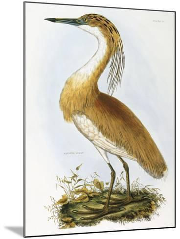 Squated Heron-Prideaux Selby-Mounted Giclee Print