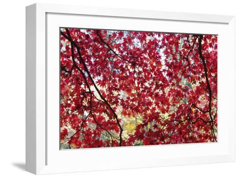 Through the Leaves-Peter Adams-Framed Art Print