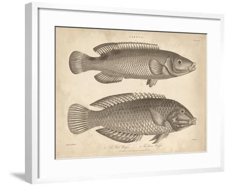 Labrus-J Pass-Framed Art Print