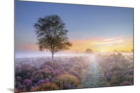 Heath at Dawn-Steve Docwra-Mounted Giclee Print