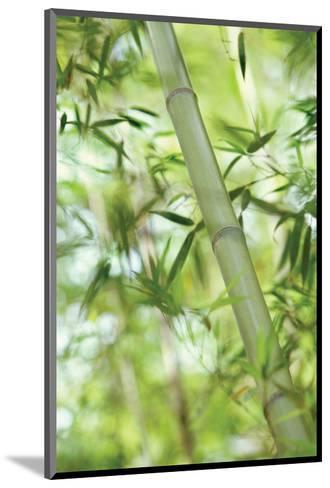Bamboo I-Karin Connolly-Mounted Art Print