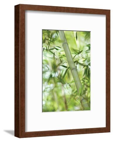Bamboo I-Karin Connolly-Framed Art Print