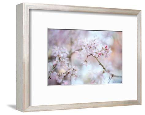 Blooming Beauty-Karin Connolly-Framed Art Print