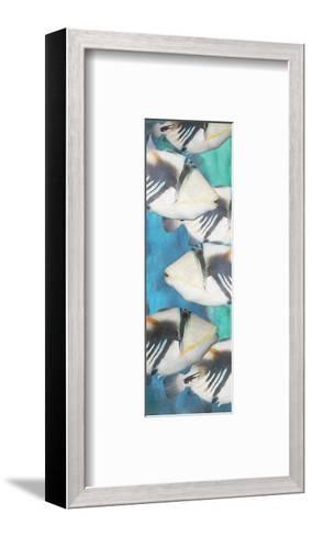 Huma Picasso Triggerfish 1-Melinda Bradshaw-Framed Art Print