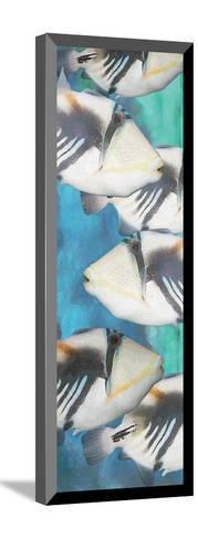 Huma Picasso Triggerfish 1-Melinda Bradshaw-Mounted Art Print