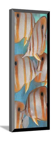 Copper Banded Butterfly-Melinda Bradshaw-Mounted Art Print