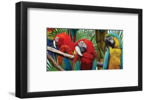 Macaws-Melinda Bradshaw-Framed Art Print